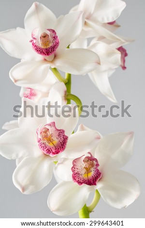 A breathtaking orchid displays all its beauty as the sunlight gently strikes its petals. Beautiful for wedding invitations, gardening magazines, advertisements, and many other great ideas and concepts - stock photo