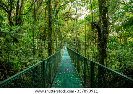 a bridge in the rain forest - stock photo