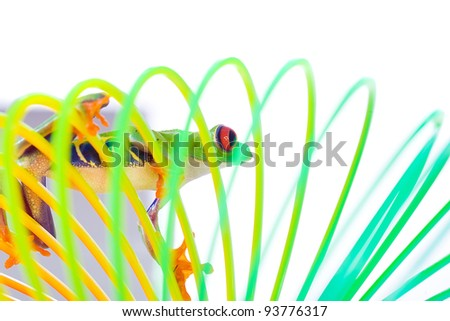 A bright, colorful red eyed tree frog climbing on a spring, coil toy. - stock photo