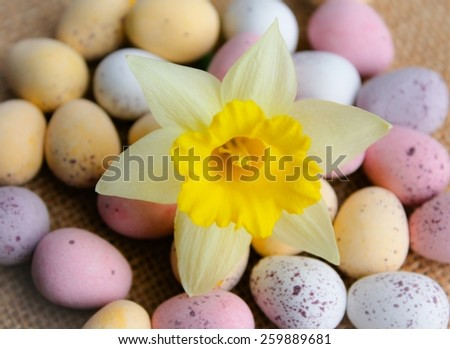 A bright daffodil with chocolate Easter eggs - stock photo