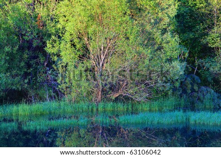 A bright green tree near the calm pond.