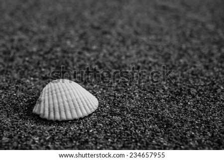 A bright mussel in dark volcanic sand