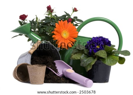 A bright orange flower and rose with all the tools to plant them. Springtime, growth, new life - stock photo