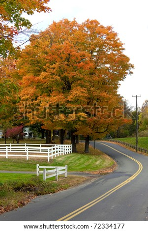 A bright orange maple tree in a country setting during the autumn months. - stock photo