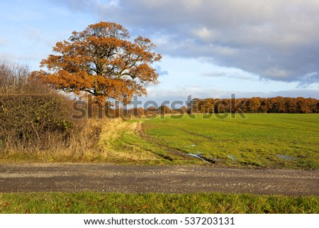 a bright orange oak tree in autumn with woodland and crops in a yorkshire landscape under a blue cloudy sky