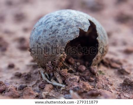 A broken wild bird egg on the floor - stock photo