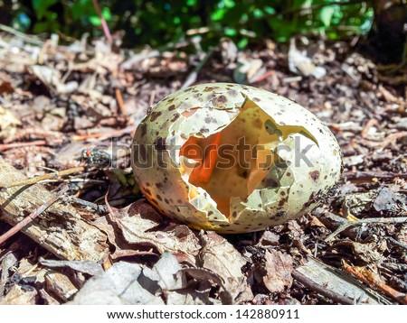 A broken wild bird egg on the forest floor - stock photo
