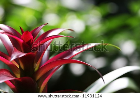 A bromeliad with copy space - stock photo