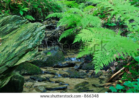 A brook in the forest with some fern next to it