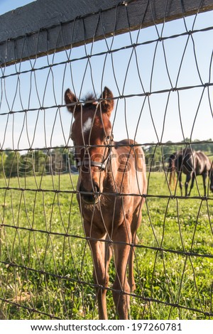 A brown colt in pastures of horse farms - stock photo