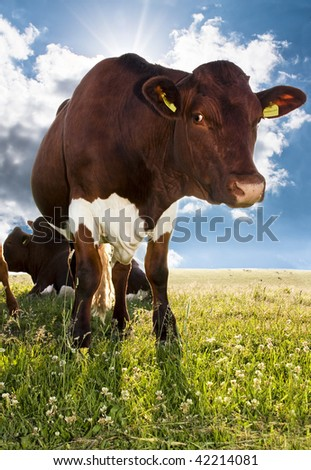 A  brown cow against a blue sky backdrop - stock photo