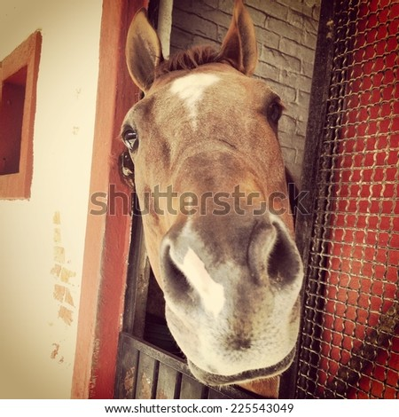A brown horse looking out of his stall. - stock photo