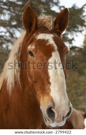 A brown horse with trees. - stock photo