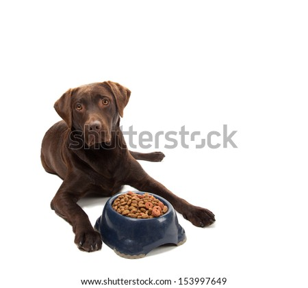 A brown labrador laying next to a bowl with dry dog food - stock photo