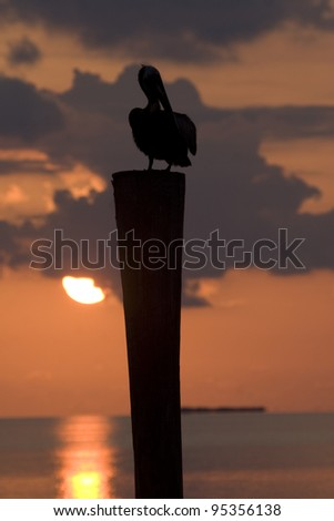 A Brown pelican perched at sunset in the Florida Keys.