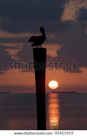 A Brown pelican perched at sunset in the Florida Keys. - stock photo