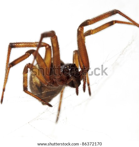 A brown spider making a web in a white background - stock photo