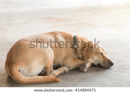 A brown stray dog is sleeping (Lying) on the warm cement floor. Homeless dog. - stock photo
