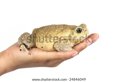 a brown toad in the palm of a hand