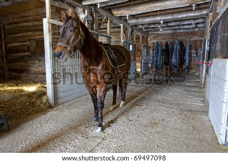 A brownish red quarter horse in a small private stable with some tack still on after a hack in the winter woods. - stock photo