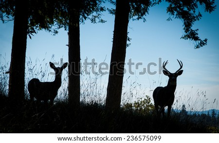 A buck and a doe silhouetted with trees and grass against a blue sky.