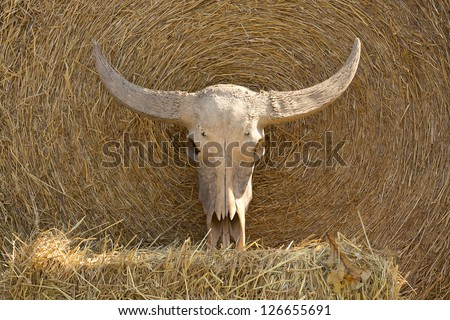 A buffalo skull. - stock photo