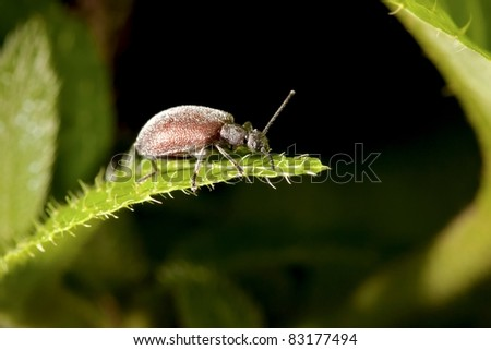 a bug stay on plant at night