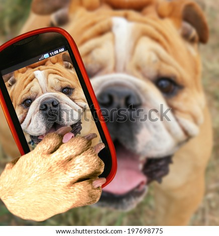 a bulldog close up of his face taking a selfie with a camera cell phone - stock photo