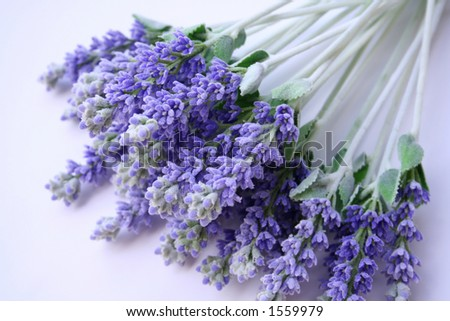 a bunch lavender lying on table - stock photo