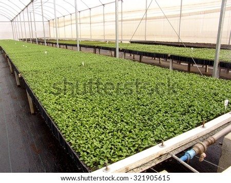 A bunch of baby plants growing inside of pots inside of a greenhouse nursery. - stock photo