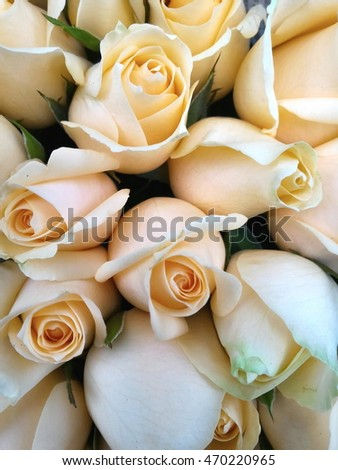 a bunch of beautiful pink roses from close up