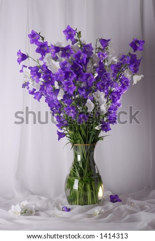 A bunch of bellflowers in a crystal vase - stock photo