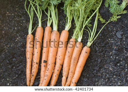 a bunch of carrots just dug out of the ground