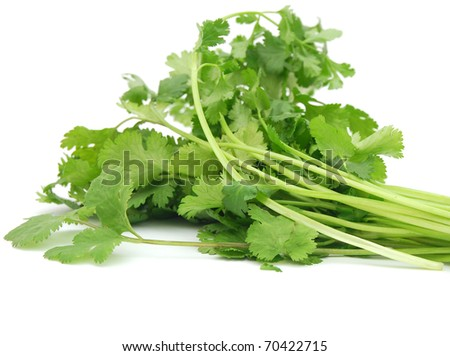 A bunch of cilantro food - stock photo