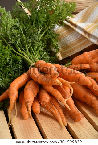A bunch of fresh baby carrots drying on a counter top - stock photo