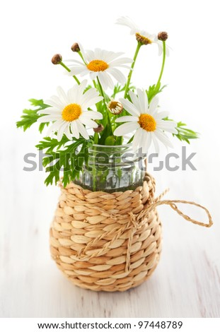 A bunch of fresh chamomile flowers - stock photo