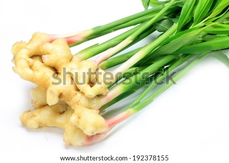 A bunch of ginger root with the greens still attached. - stock photo