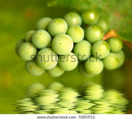 a bunch of green grapes - stock photo