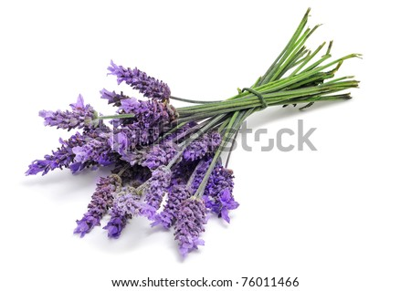 a bunch of lavender flowers on a white background - stock photo