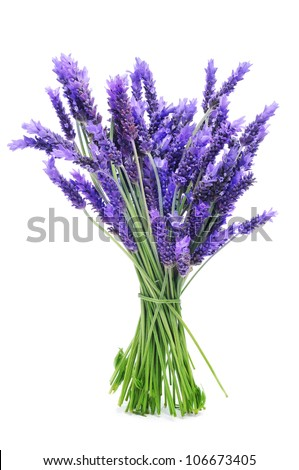 a bunch of lavender on a white background - stock photo