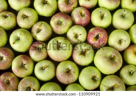 A bunch of little green apples right off the tree. I - stock photo