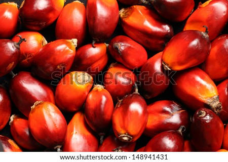 a bunch of oil palm fruits on a black background - stock photo