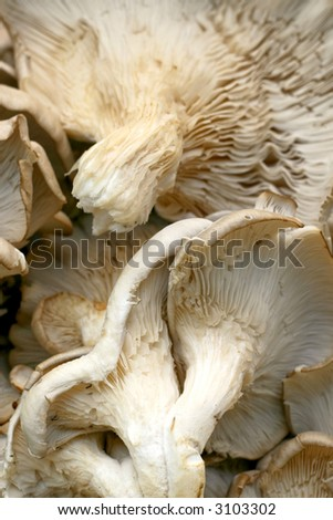 A bunch of organic mushrooms on the market - stock photo
