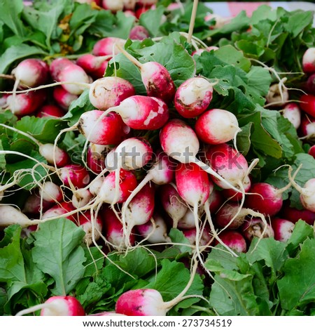 A bunch of organically grown sparkler radish in the Fruits and Vegetables stall at University District farmer market (aka U-district) in Seattle, WA, USA - stock photo