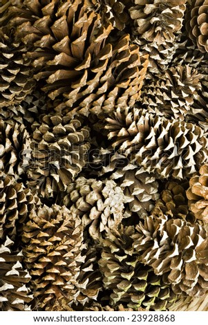 A bunch of pine cones - stock photo