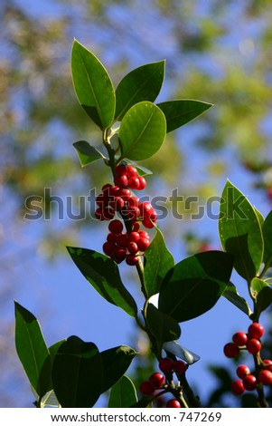 A bunch of red berries on a branch - stock photo