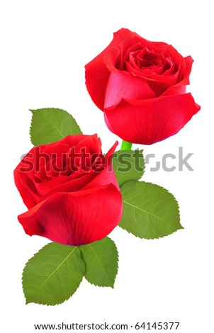 A bunch of red roses - stock photo