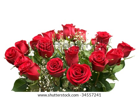 A bunch of red roses on a white background.