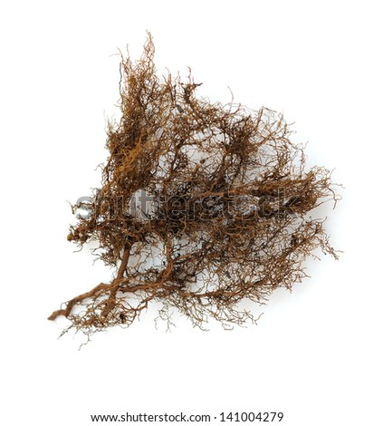 a bunch of tree  root on white background