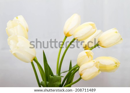 A bunch of tulips on a glass pot  - stock photo